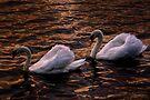 Always together (Swans)  by LudaNayvelt