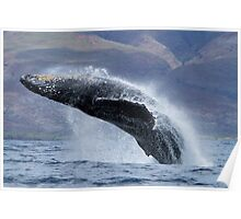 The Power and grace of a Humpback Whale Poster