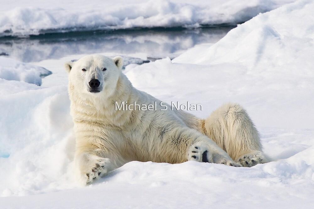 Curious polar bear by Michael S Nolan