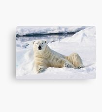 Curious polar bear Canvas Print