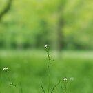 Tiny flower by photographyjen