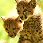 Cheetah cubs by Alan Mattison
