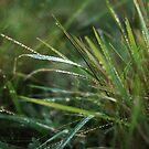 Dew on the grass by photographyjen