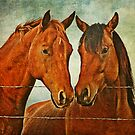 On the Fence by Laura Palazzolo