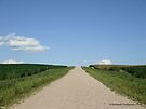 Country Road Take Me Home by Barberelli