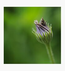 The Power of Simplicity Photographic Print