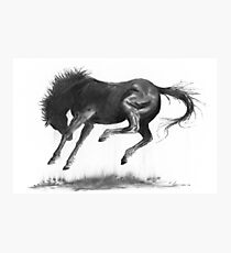 Horse and Dust Photographic Print