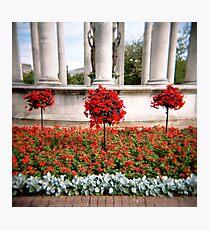 Three red bushes Photographic Print