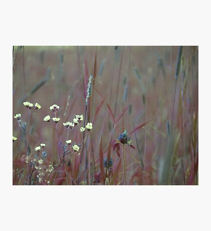 summer grass 27 Photographic Print