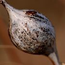 Insect Gall by Larry Trupp