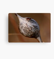 Insect Gall Canvas Print