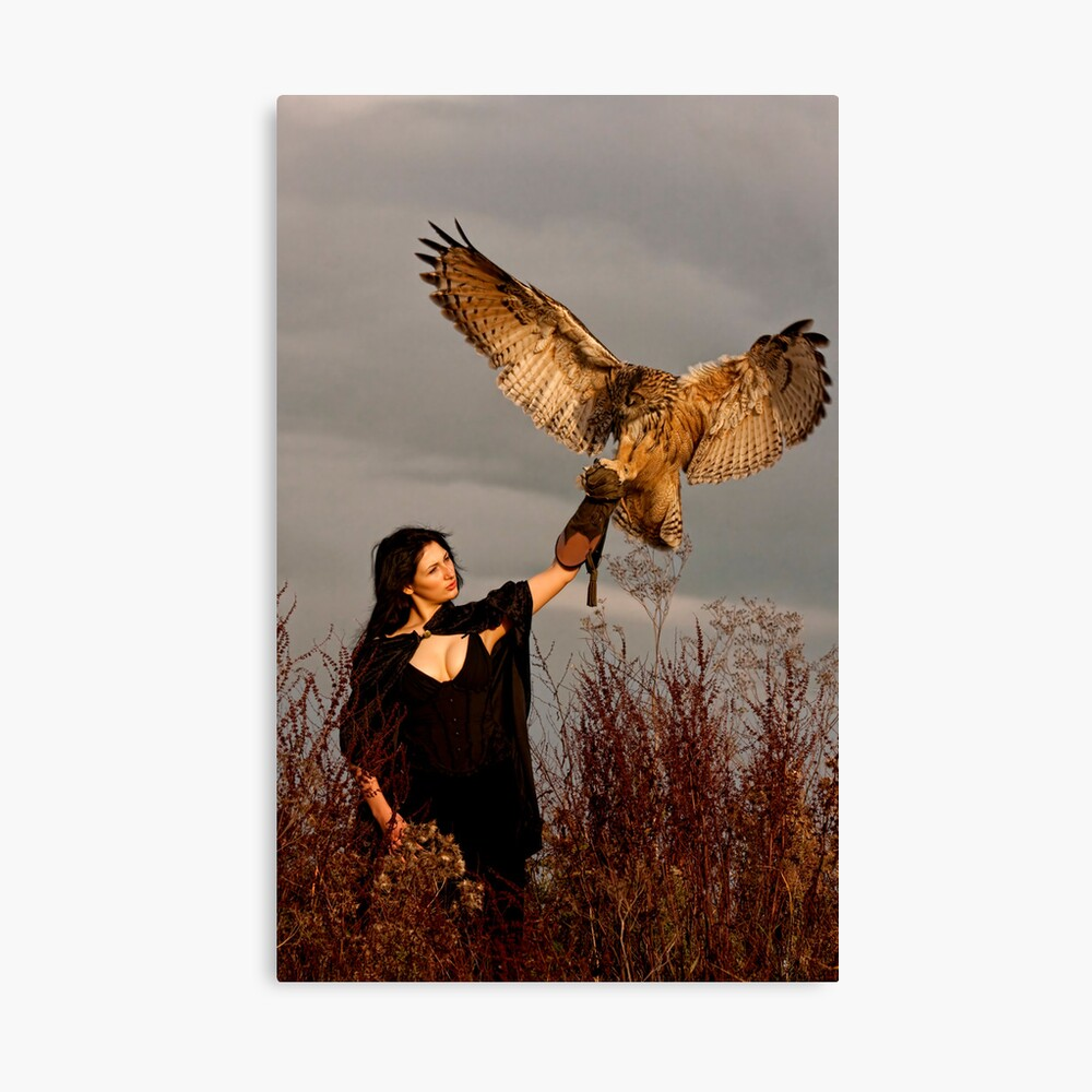 The Owl Returns Canvas Print