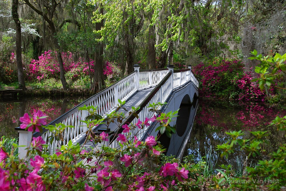 Bridge in Magnolia Plantations Garden by Susanne Van Hulst