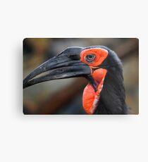 African Ground Hornbill Metal Print