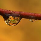 Drop of Color by Steve  Taylor
