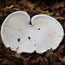 White Fungi by Janone