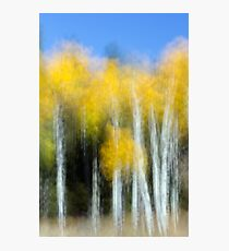 Aspens Doing Their Shimmery Dance Photographic Print