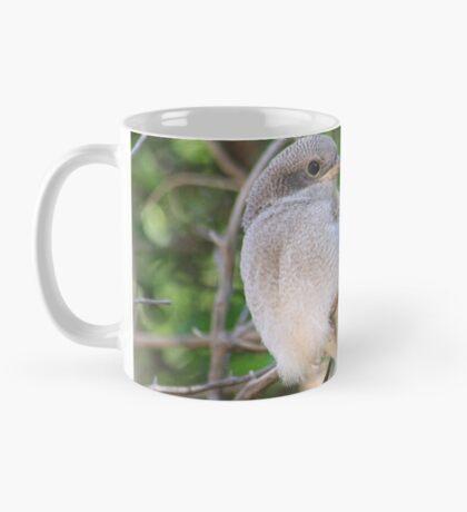 Fiscal Shrike Fledgling - One of four Mug