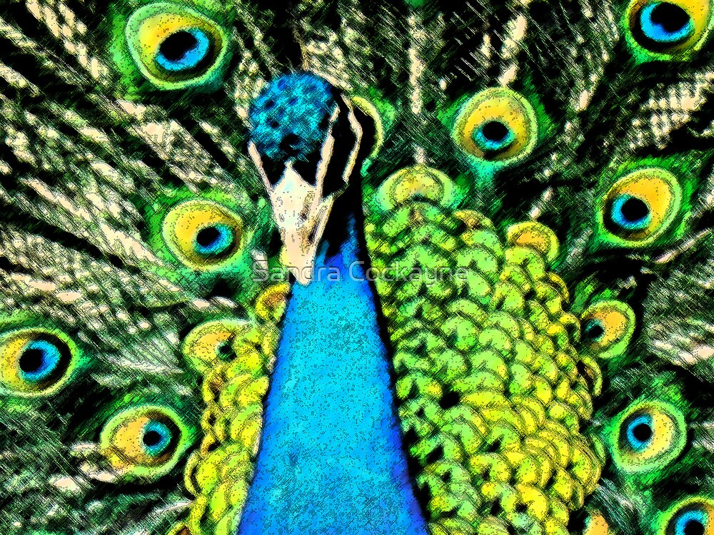 Pen & Ink....Peacock.... by Sandra Cockayne