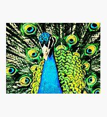 Pen & Ink....Peacock.... Photographic Print