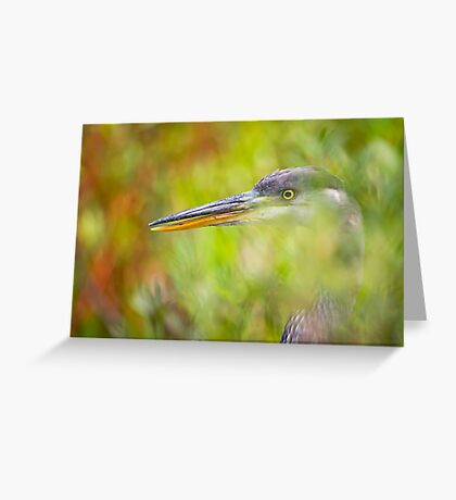In Hiding Greeting Card