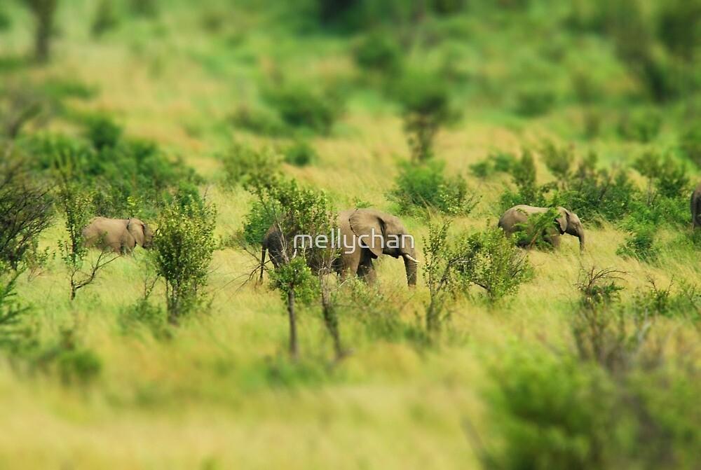lady elephant walk, pilanesburg by mellychan
