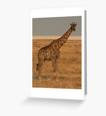 Giraffe - Etosha National Park Greeting Card