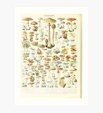 Adolphe Millot champignon B Kunstdruck