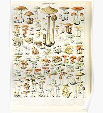 Adolphe Millot champignon B Poster