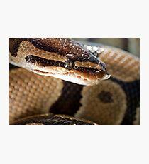 Python Photographic Print