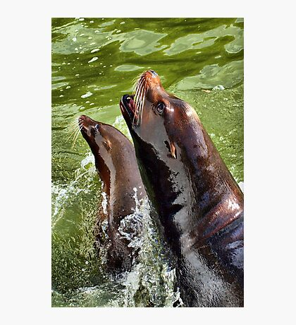 A Handsome Couple Photographic Print