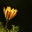 Luminosity by Marion  Cullen