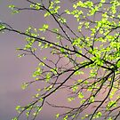 Luminous Night by hinting