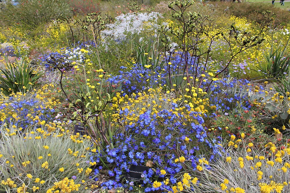 Spring wildflower colour by Susan Moss