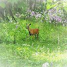 Wisconsin Whimsy - Deer in the Phlox by EloiseArt