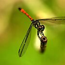 Dragonfly on Perch I by Amran Noordin