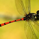 Dragonfly on Perch III by Amran Noordin