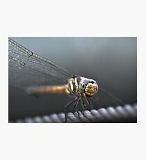 Dragon on a wire Photographic Print