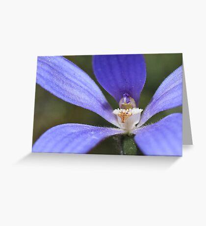Enamel Orchid - Wongan Hills, Western Australia Greeting Card