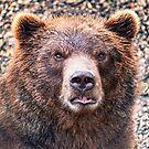 I Bear To Differ! 2 by Alex Preiss