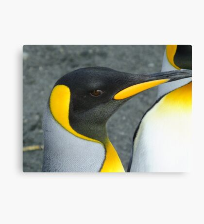 From my last visit to Antarctica. Taken on Macquarie Island Feb 14 2013 Canvas Print