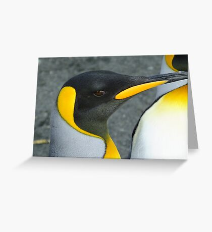 From my last visit to Antarctica. Taken on Macquarie Island Feb 14 2013 Greeting Card