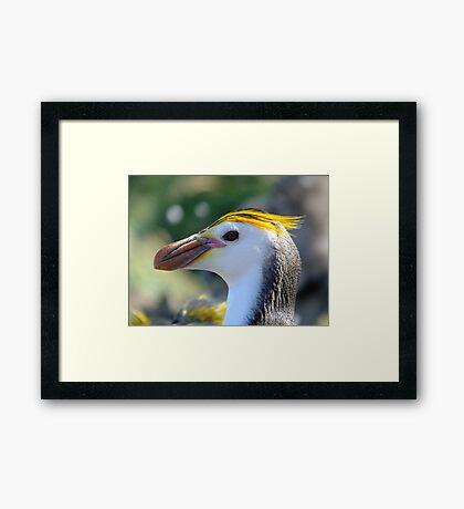 Taken on Macquarie Island February 14th 2013 Framed Print