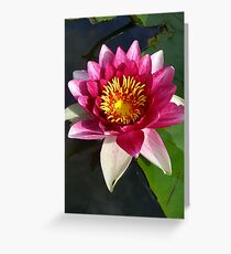 Absorbing sunlight. Greeting Card