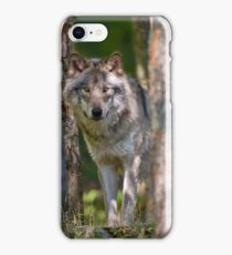 Timber wolf in Forest iPhone Case/Skin