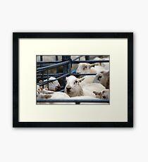 Welsh Sheep Market Framed Print