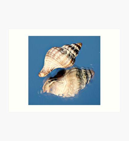 Shell Reflection Art Print
