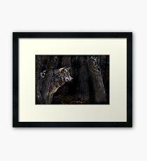 Timberwolf   Framed Print