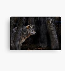 Timberwolf   Canvas Print