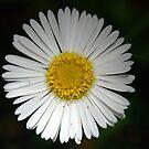 Sweet Daisy Delight by Bev Woodman